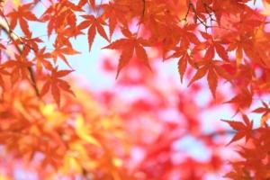 【色彩心理】赤の心理【カラーセラピー/レッド】